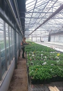 Picture of a student in a greenhouse.
