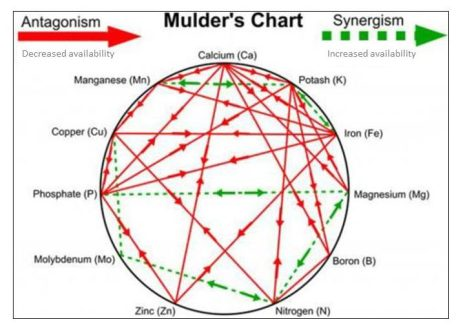Figure 2. Mulder's chart shows positive and negative interactions between plant nutrients.