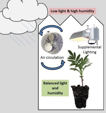 Figure 1. Supplemental lighting and proper air flow to control humidity are great options to combat dark and rainy days if available.