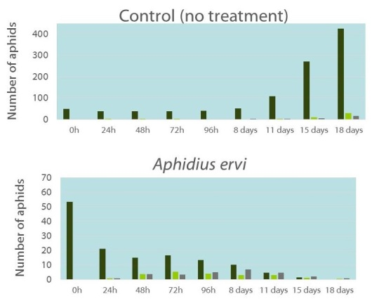 A ervi for foxglove aphid control