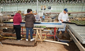4 workers on a potting line in a greenhouse